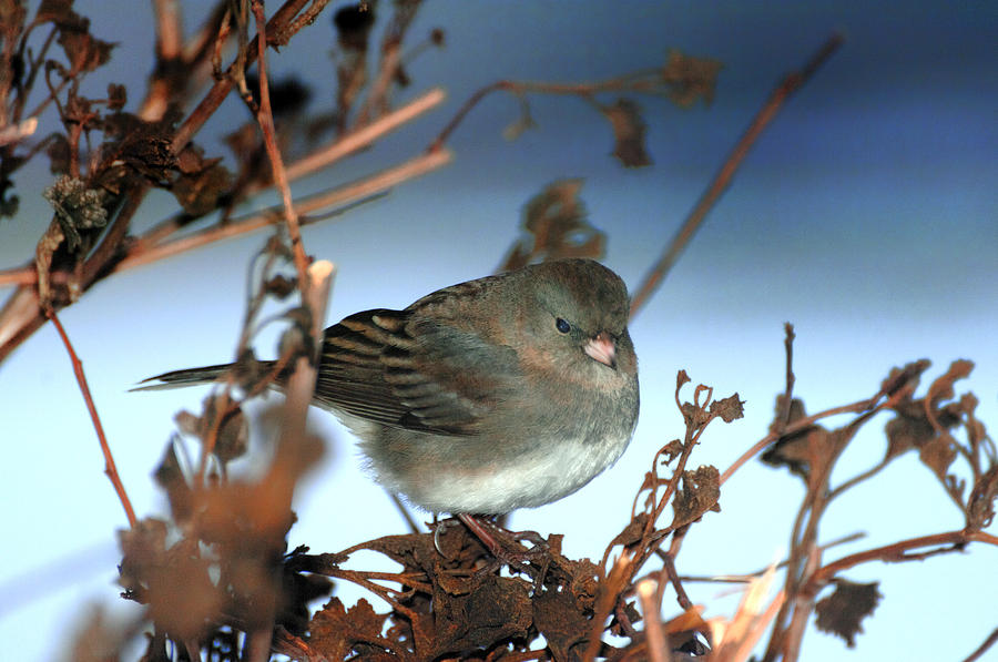 Bird Photograph - His Eye Is On The Sparrow by Richard Oliver