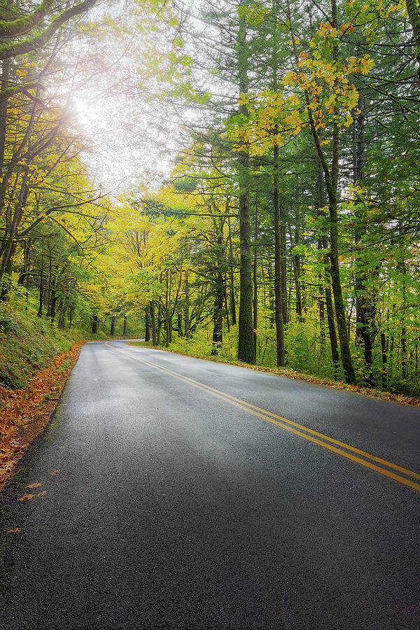 Historic Photograph - Historic Columbia River Highway In Fall by David Gn