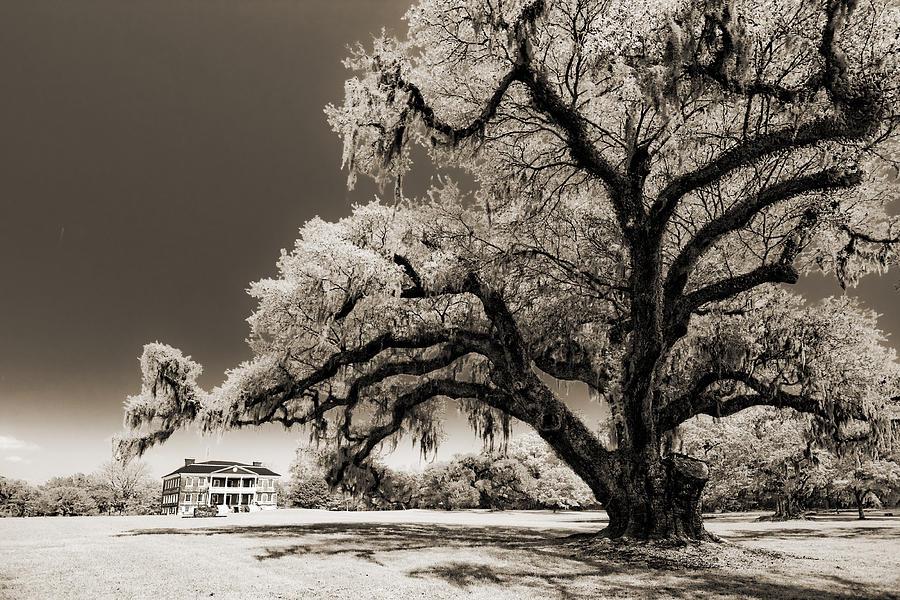 Historic Photograph - Historic Drayton Hall In Charleston South Carolina Live Oak Tree by Dustin K Ryan