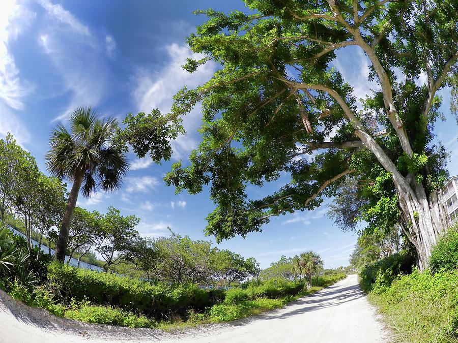 Historic Jungle Trail Vero Bch Fl I Photograph by Tina Baxter