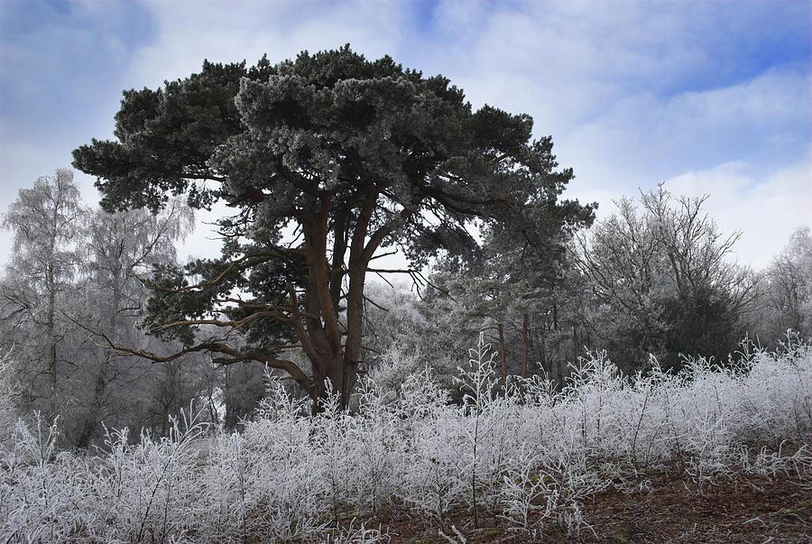 Hoar Photograph - Hoar Frost by Hazy Apple