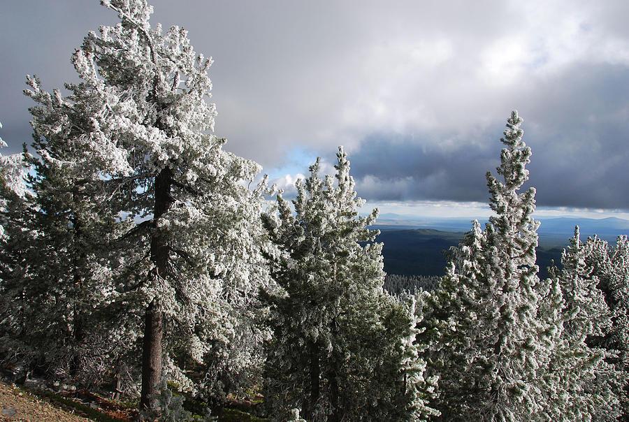 cc9c0bf2cefb8 Hoar Frost On Paulina Peak Photograph by Doug Shanaman
