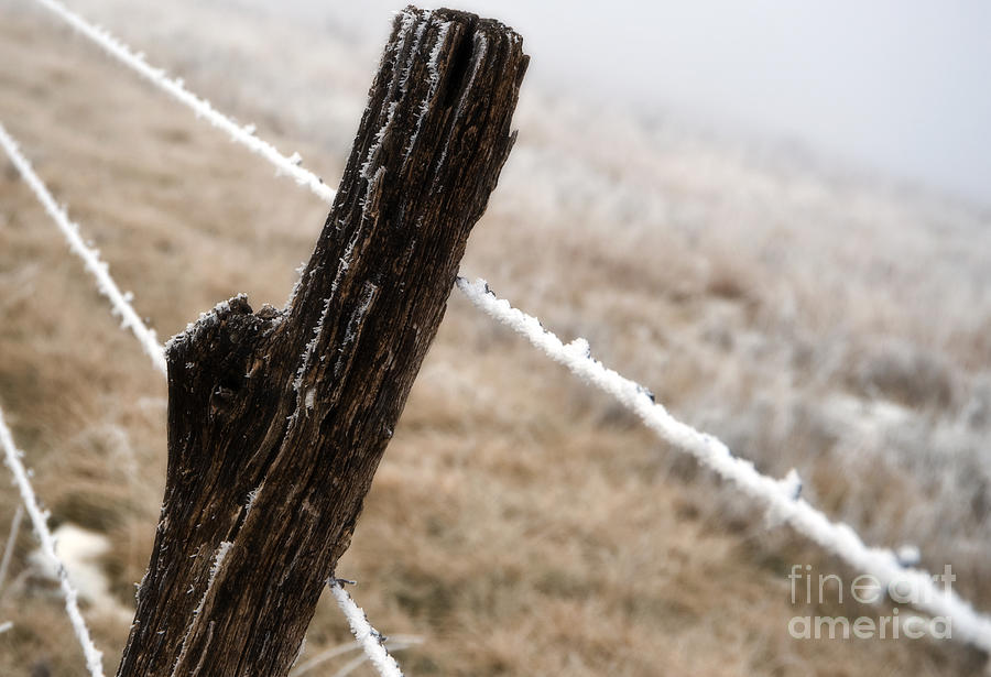 Kansas Photograph - Hoarfrost And Fence by Fred Lassmann