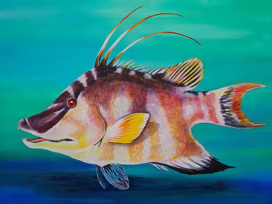 Hogfish Painting - Hogfish by Jacqueline Endlich