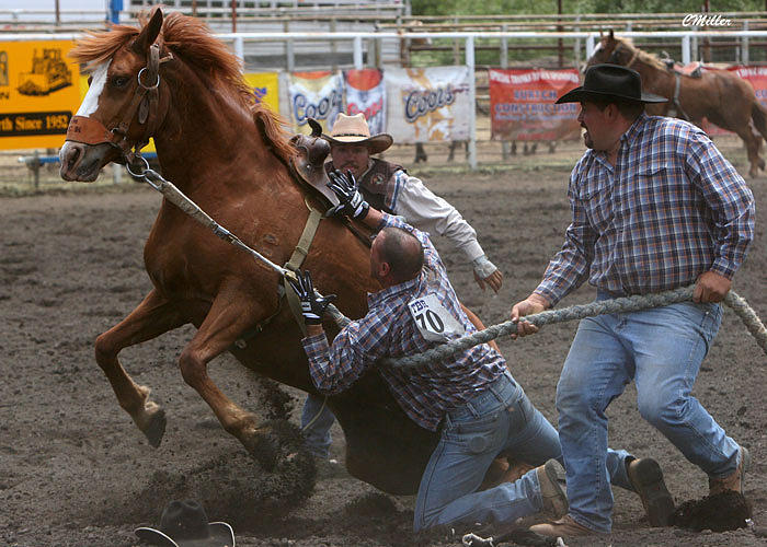 Rodeo Photograph - Hold er Tight Boys.. by Carol Miller