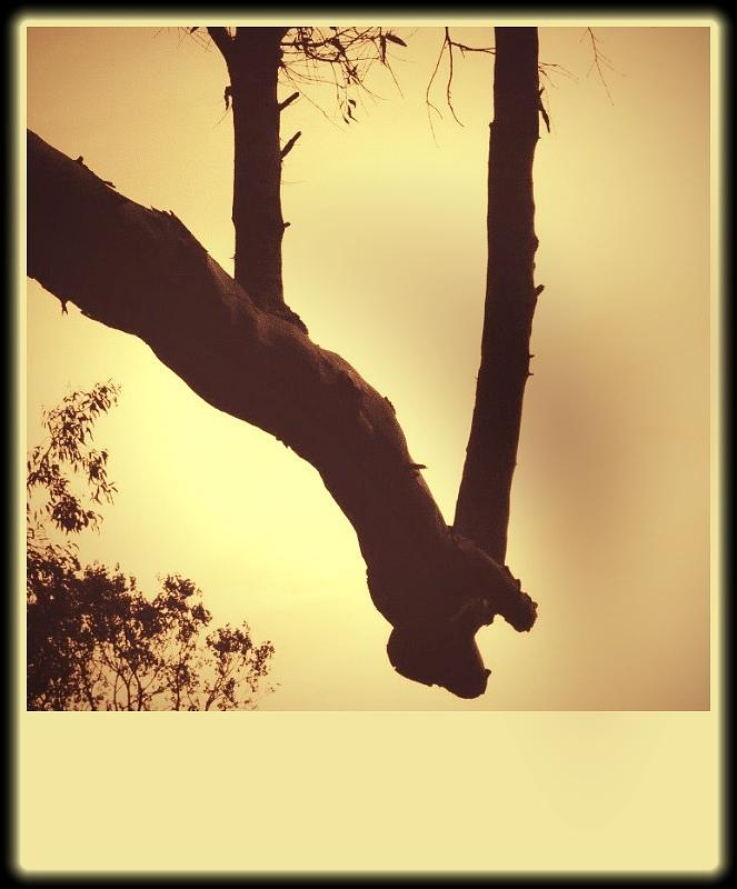 Trees Photograph - Holding Hands by Sharon Green