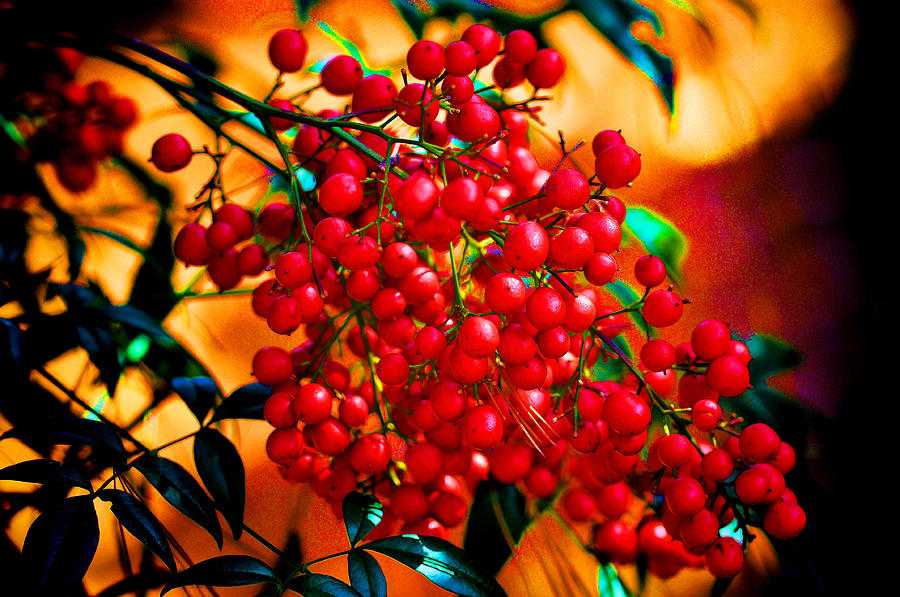 Berry Photograph - Holiday Berries by Russ Mullen