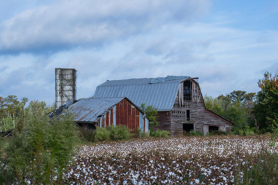 Holland Barn in Cotton by Cyndi Goetcheus Sarfan