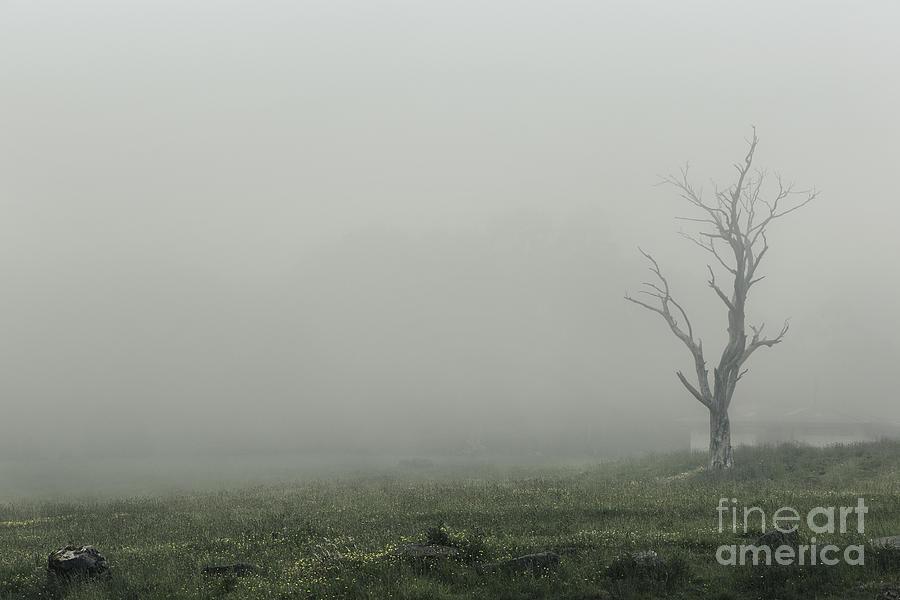 Tree Photograph - Hollow by Andrew Paranavitana