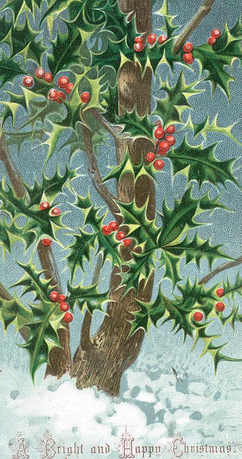Christmas Holly Tree.Holly Tree Christmas Card