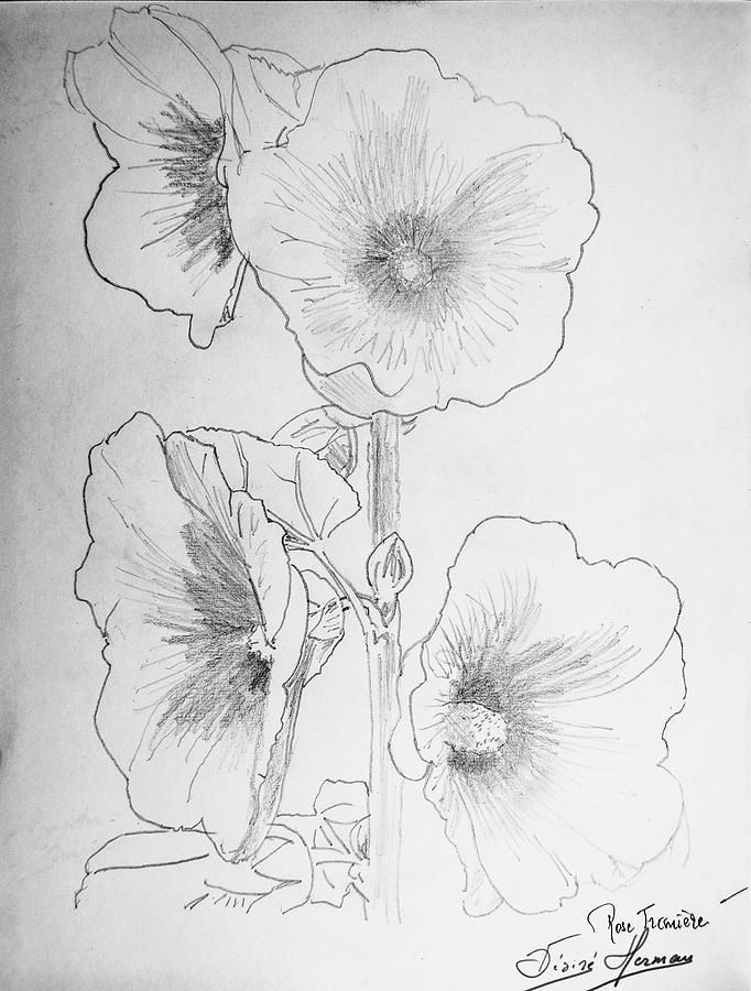 Hollyhock Drawing - Hollyhocks by George Desire Herman
