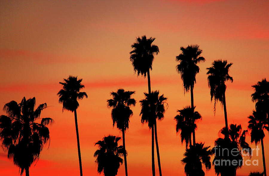 Hollywood Photograph - Hollywood Sunset by Mariola Bitner