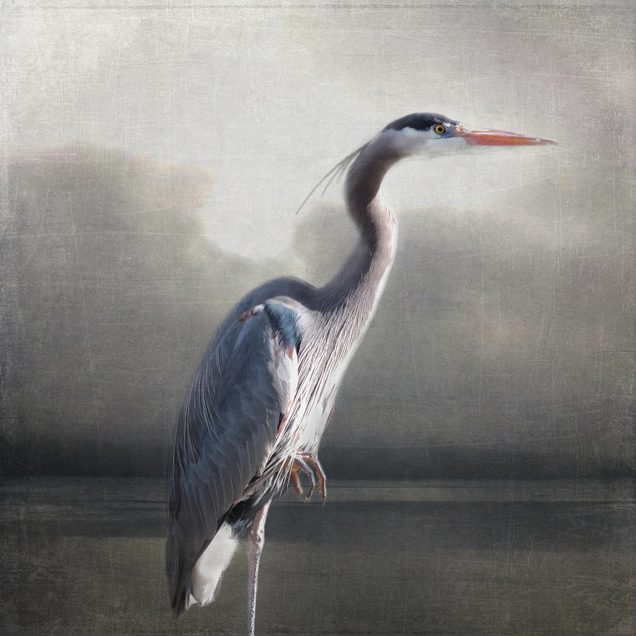 Homage to Audubon by Sally Banfill