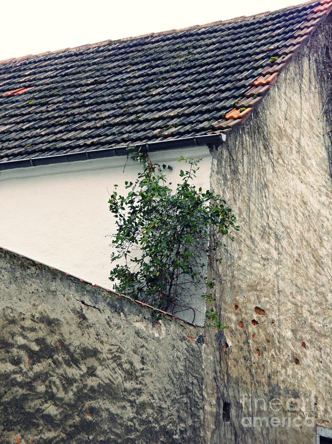 Home And Garden Schierstein Photograph By Sarah Loft
