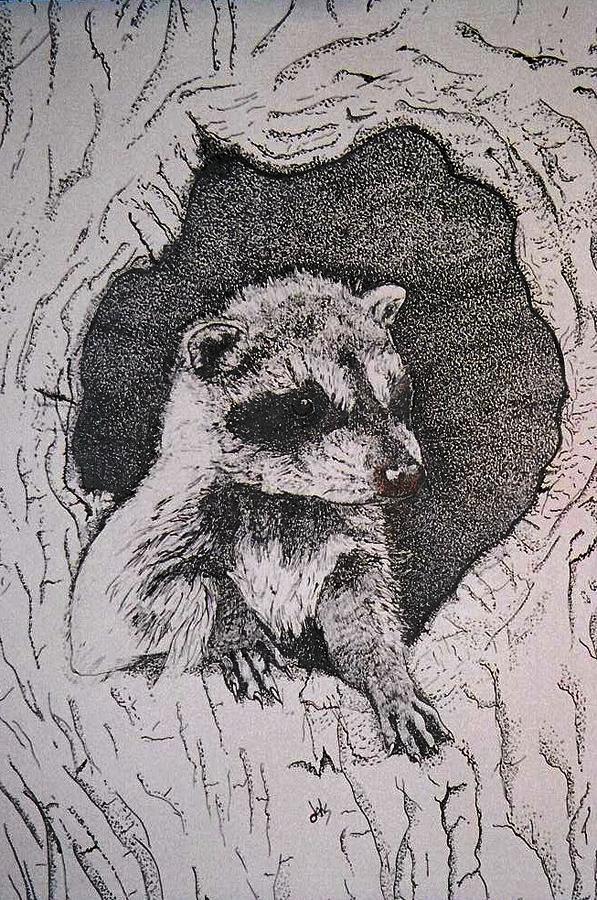 Raccoon Drawing - Home by Debra Sandstrom