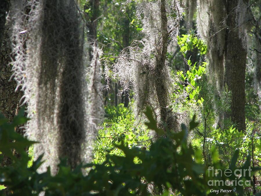 Florida Photograph - Home by Greg Patzer
