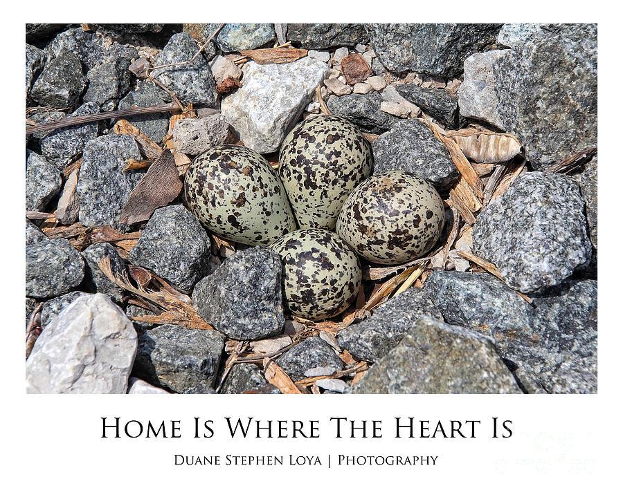 Killdeer Photograph - Home Is Where The Heart Is by Duane Loya