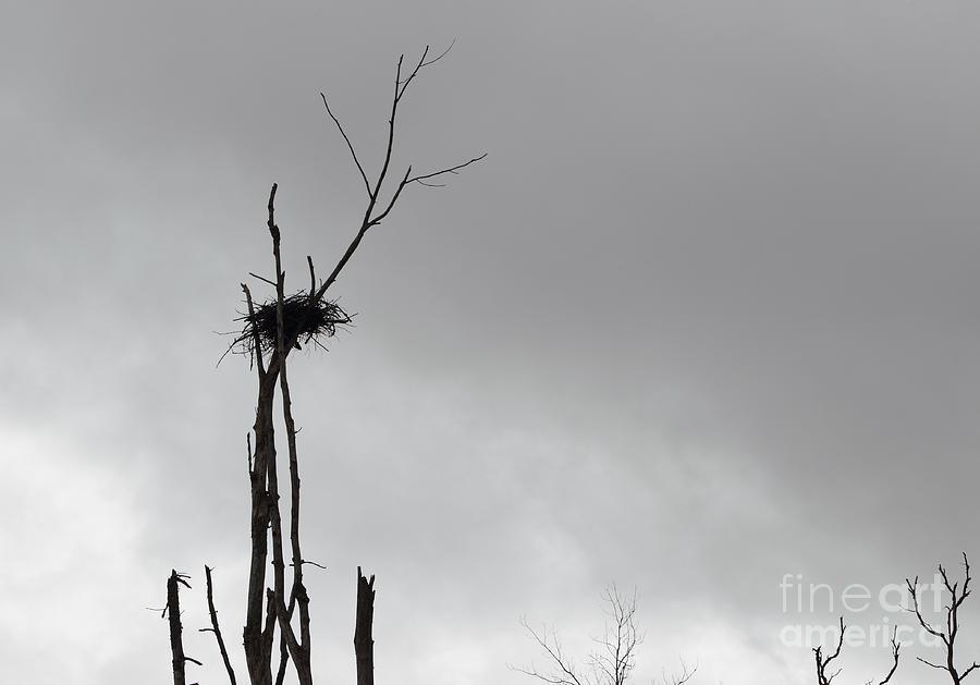 Bird Nest Photograph - Home by Josh Baldo