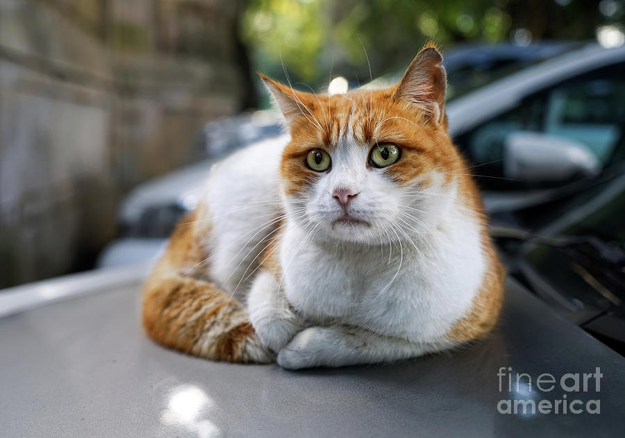 Homeless Red Cat Photograph