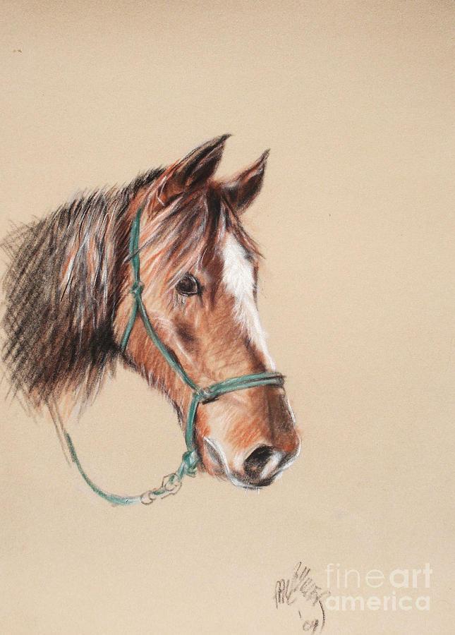 Morgan Horse Painting - Honcho At The Morgan Horse Ranch Prns by Paul Miller