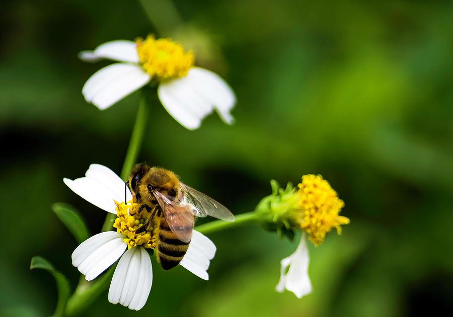 Honey Bee by GK Hebert Photography