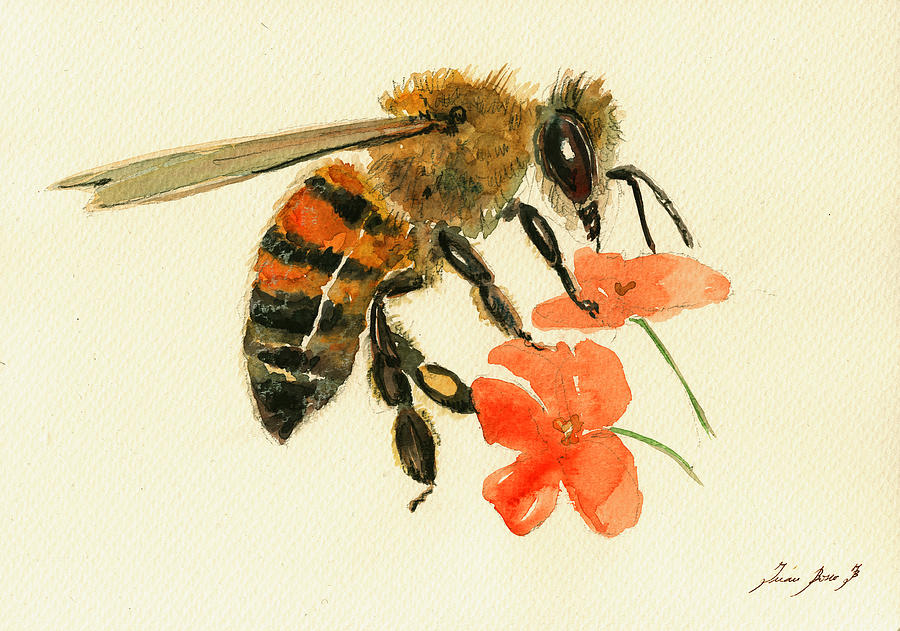 Honey Bee Drawing Painting