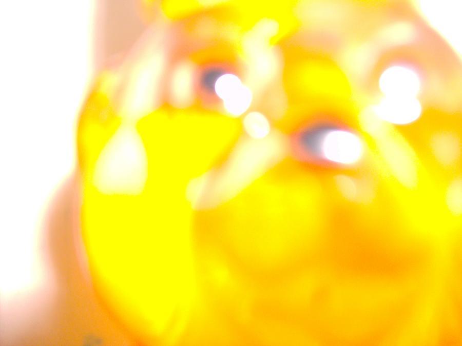Honey Photograph - Honey by Bob Smith
