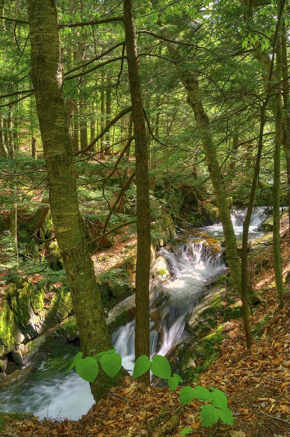 Waterfall Photograph - Honey Hollow by Mandy Wiltse