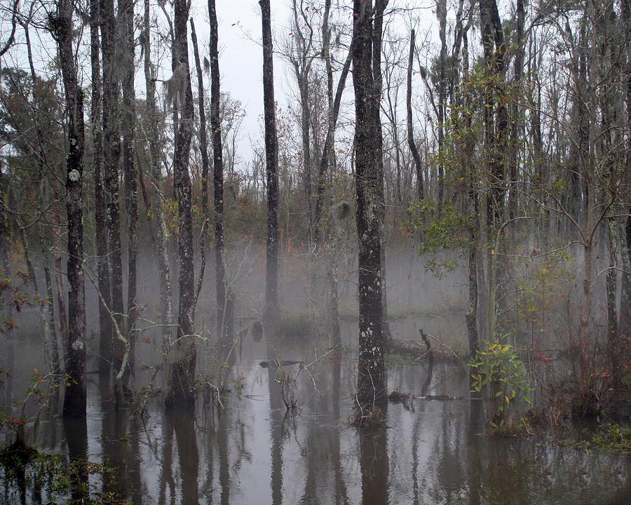 Louisiana Photograph - Honey Island Swamp by Benny Dupre
