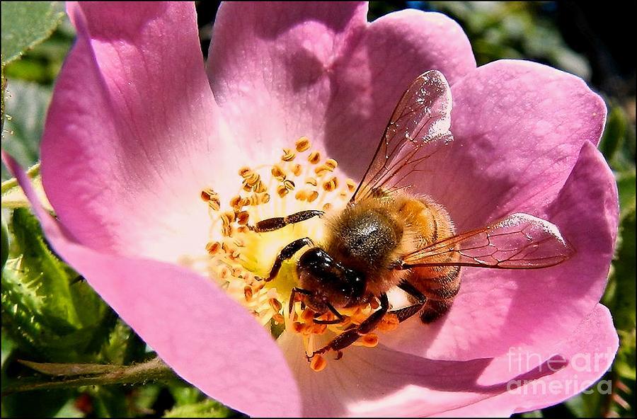 Honey Tree by Julia Hassett