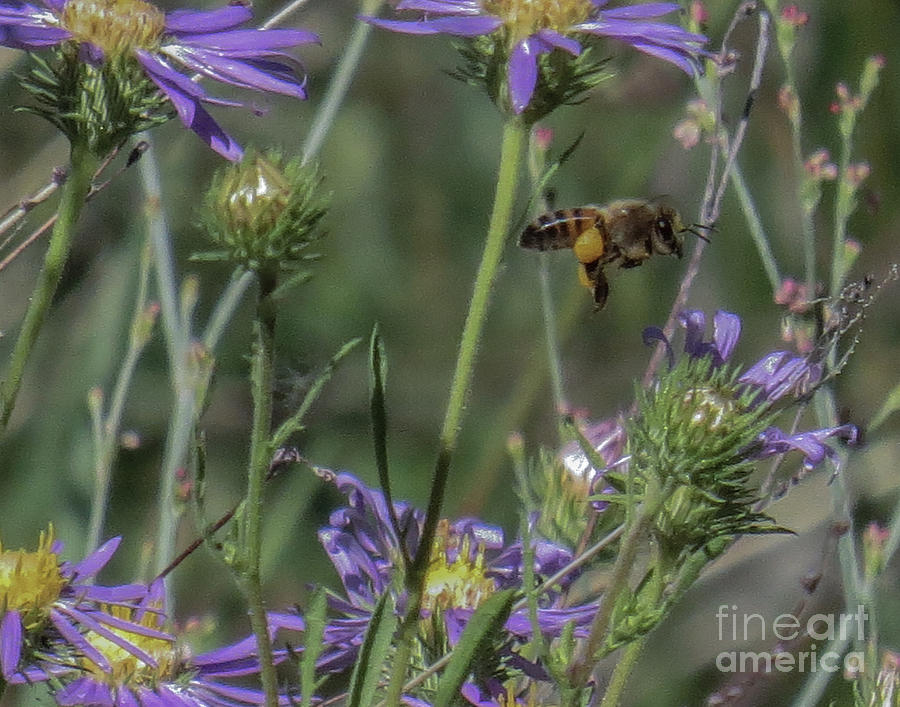 Macro Photograph - Honeybee 2 by Christy Garavetto