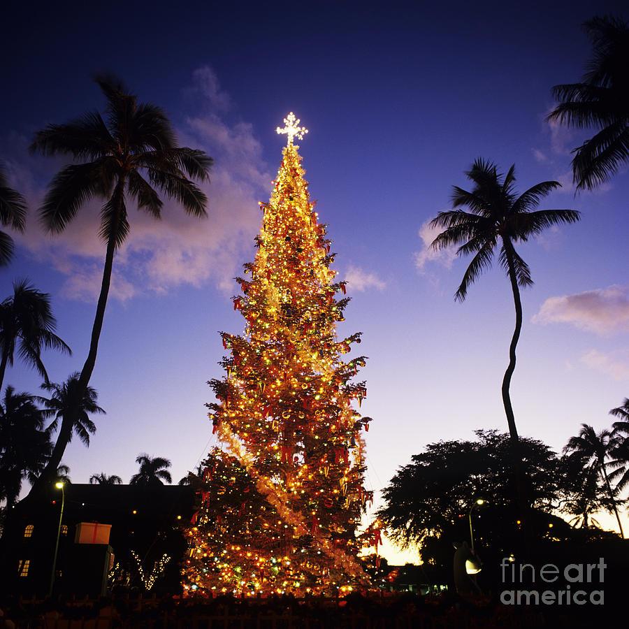 Blue Photograph - Honolulu Christmas by Kyle Rothenborg - Printscapes