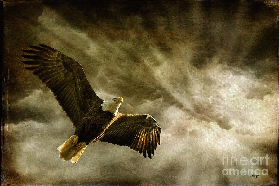 Eagles Photograph - Honor Bound by Lois Bryan