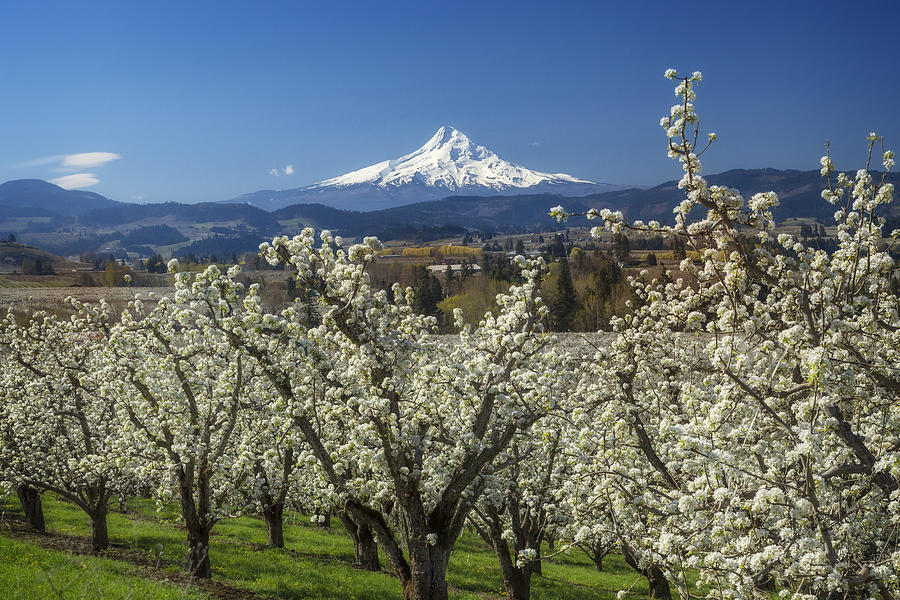 Hood River Valley in Bloom by Jon Ares