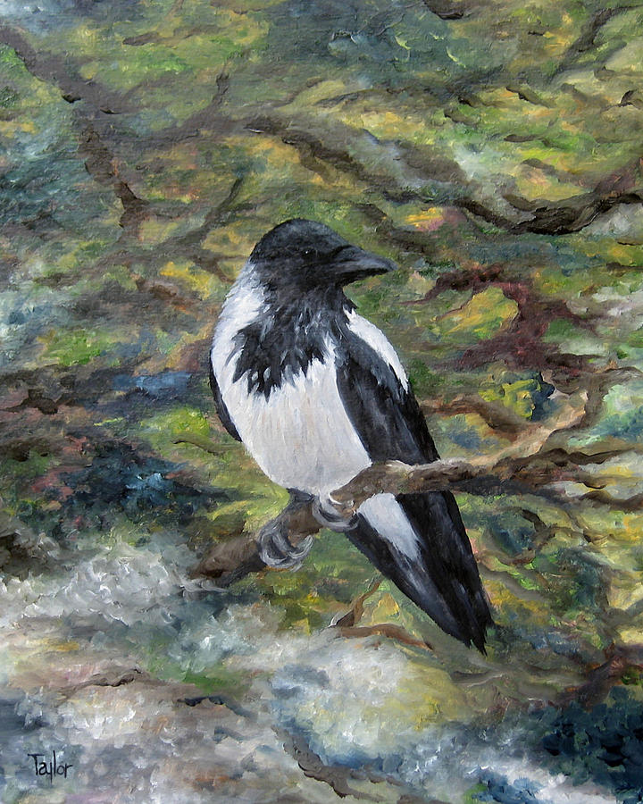 Hooded Crow by FT McKinstry