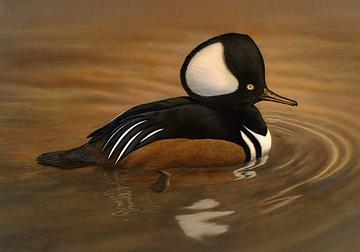 Miniature Painting - Hooded Merganser by Bonnie Latham