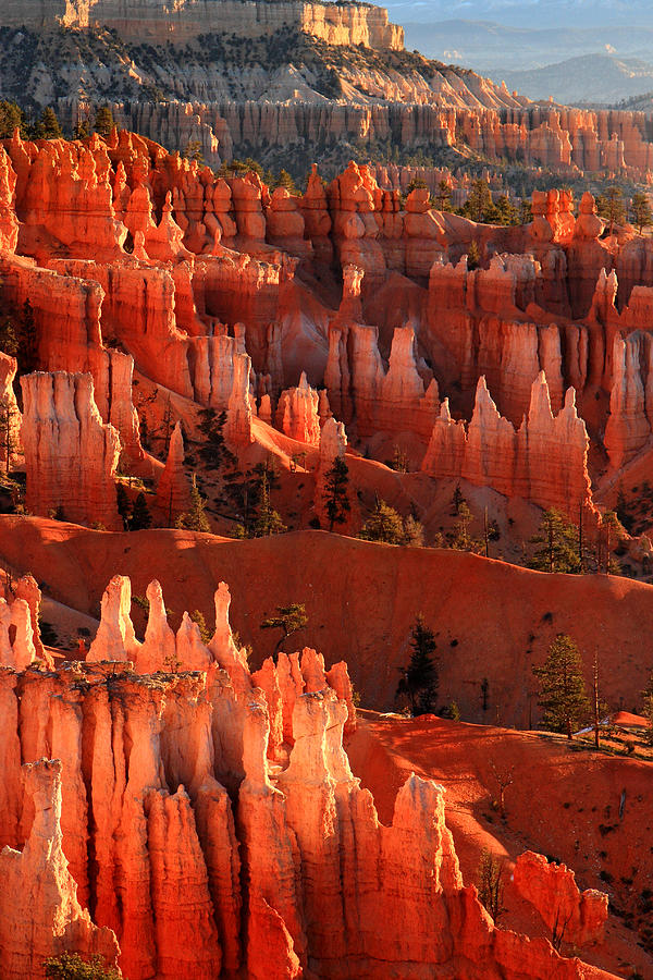 Bryce Photograph - Hoodoos Of Sunset Point At Sunrise  In Bryce Canyon by Pierre Leclerc Photography