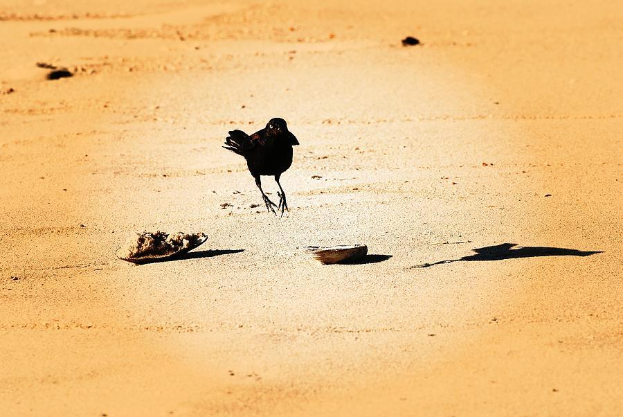 Jersey Shore Photograph - Hop Like A Bunny Bird - Jersey Shore by Angie Tirado