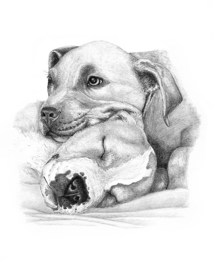 Pit Bull Drawing - Hope And  Innocence by Deanna Maxwell