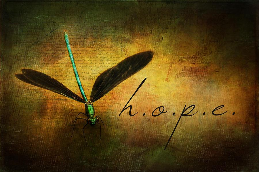 Damselfly Painting - Hope Ebony Jewel Wing Damselfly On Golden Sunlight Dragonfly by Christina VanGinkel