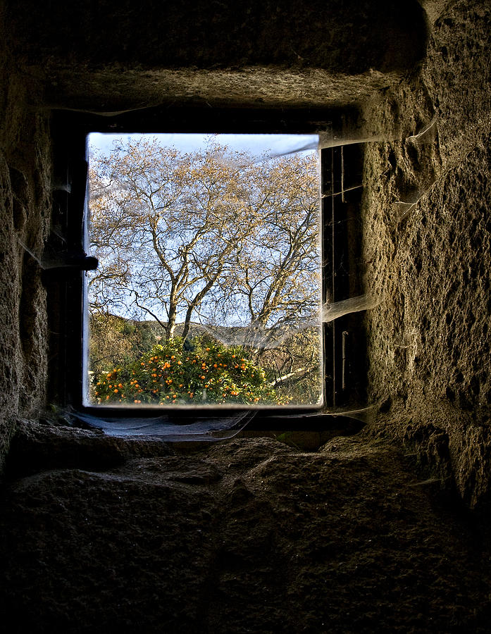 Cobweb Photograph - Hope by Ines Montenegro
