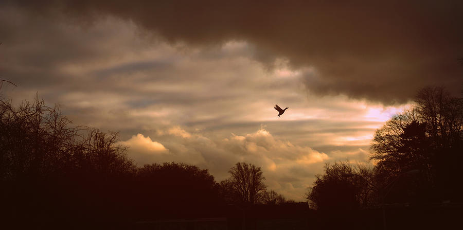 Sunset Photograph - Hope by Jessica Jenney
