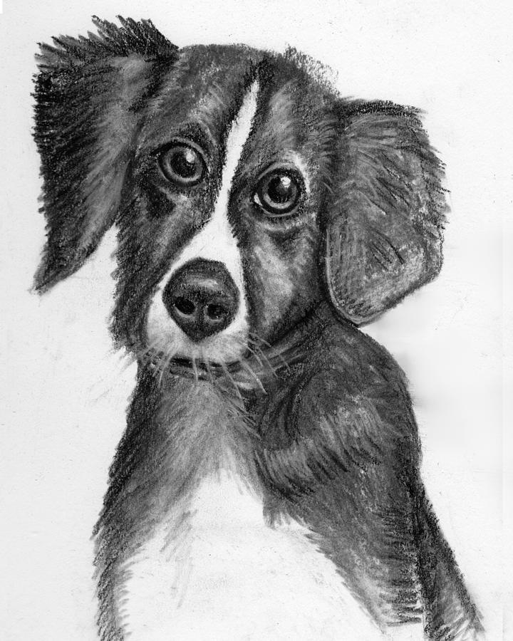 Dog Portrait Drawing - Hope by Karen Sperling