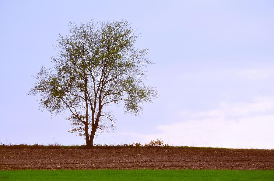 Tree Photograph - April Horizon  by JAMART Photography