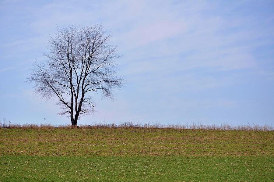 Tree Photograph - Spring Horizon  by JAMART Photography