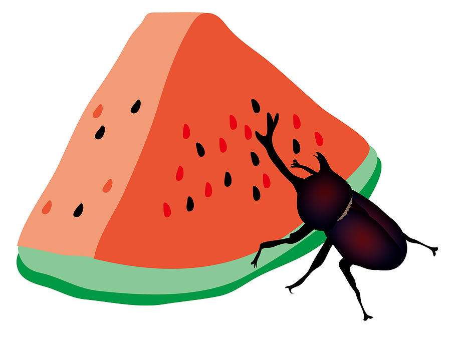 Horn Beetle Is Eating A Piece Of Red Watermelon Digital Art by Moto-hal