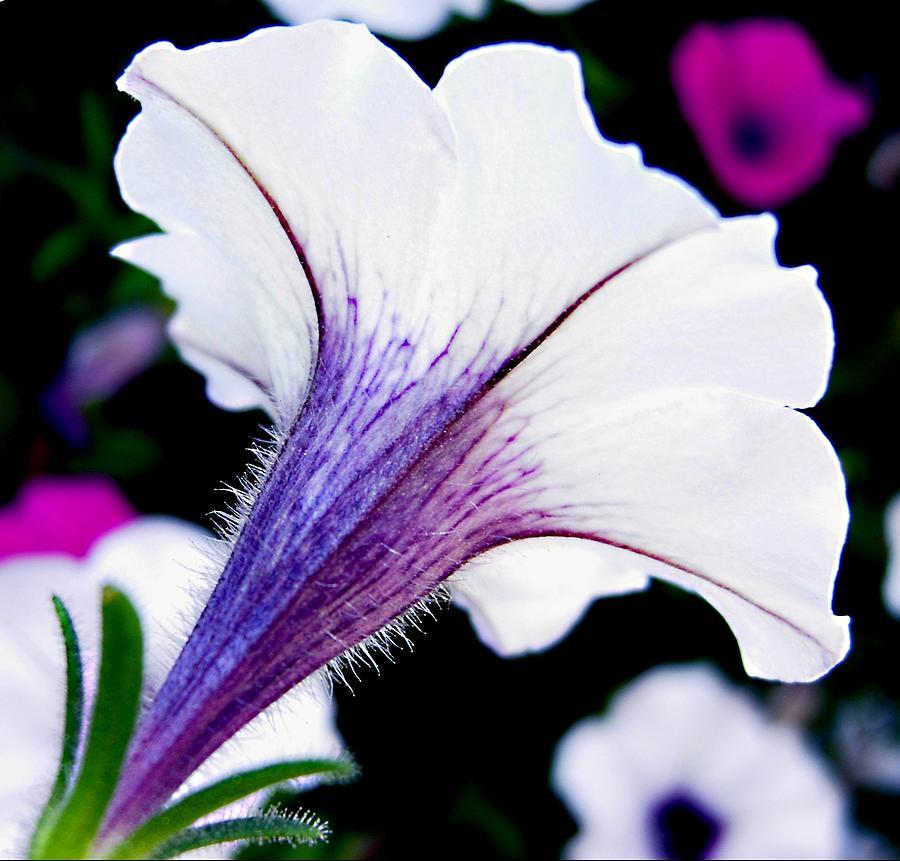 Horn Of Beauty Photograph by Darlene Grover