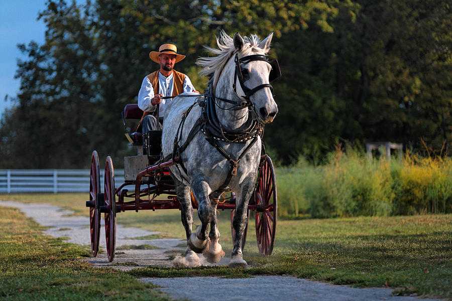 Horse Photograph - Horse And Buggy by Lone Dakota Photography