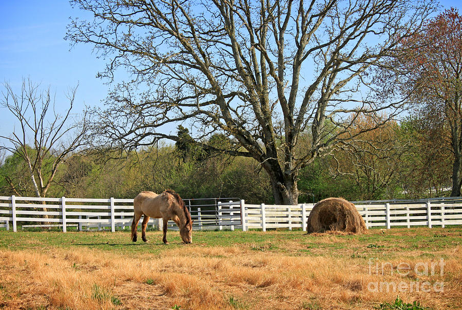Landscape Photograph - Horse And Hay by Todd Blanchard
