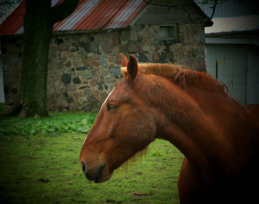 Horse Photograph - Horse And Shed by Michael L Kimble